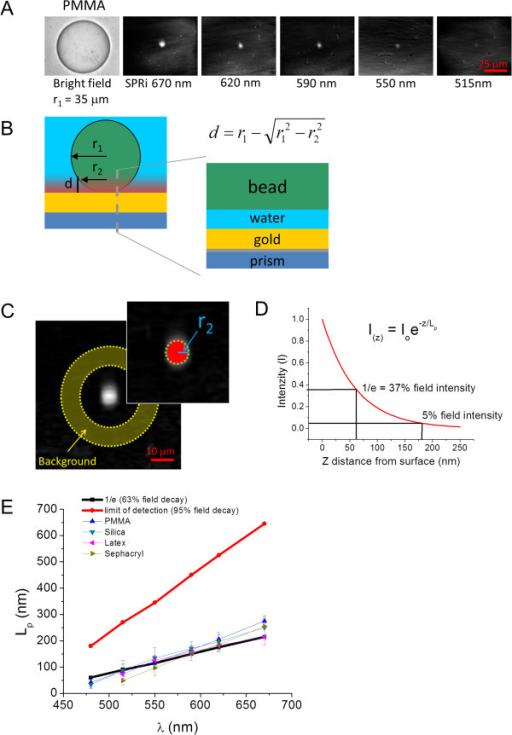 "Measurement of SPR evanescent wave (EW) penetration depth by geometric relationship of measured radii of polymer microspheres. A) Bright-field and SPR images (for 5 wavelengths) of a polymethylmethacrylate (PMMA) microsphere in water. B) Diagram of a microsphere at the SPR sensor interface showing that only a fraction of the bead lies within the EW. The equation shows the relationship between the EW penetration depth (d) and the radius of the sphere measured by bright field (r1) and SPRI (r2). The overlay shows a layer model of the interface; the water layer decreases thickness as the bead moves toward the surface and into the EW. C) SPR image and insert of a microsphere used to illustrate the image analysis procedure for measuring the value of r2, the SPRI detected radius. The standard deviation (σ) of background intensity is determined by the annulus-shaped ROI in the primary image, and in the image insert a value of 3σ is set as the threshold with pixels values above threshold colored red; the radius of the bead (r2 in blue) is determined from the area of circle (green dashed circle) computed from the threshold. D) Exponential decay from surface into media of the SPR generated EW calculated as field intensity versus distance from surface (nm). Two values are labeled: the 1/e decay at 37% field strength commonly referred to as the ""penetration depth"", and the 5% field strength value, which is the theoretical detection limit. E) Extent of the EW field depth (Lp) measured for several polymer microspheres as a function of excitation wavelength, along with theoretical values of the penetration depth (1/e) and detection limit (5% field strength). Within the standard deviation of the measurement error, the decay values agree for all microspheres and the calculated penetration depth at 1/e field decay."