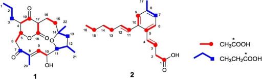 Incorporation of 13C-labeled precursors into akaeolide (1) and lorneic acid A (2).