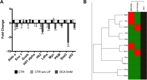 Metabolism-related gene expression in mESC following DCA treatment.(A) Fold changes were calculated for the various genes using the -∆∆Ct method relative to the CTR condition. The values represent means ± SEM of four independent experiments. (B) Heat map of average gene expression represented as log10 of Ct values. An increase in gene expression is depicted in red, whereas a decrease in gene expression is represented by the green color. No differences in expression are depicted in black. Clustering was performed using the CFX manager software by Bio-Rad. * < 0.05; ** p< 0.01; ***p< 0.001.