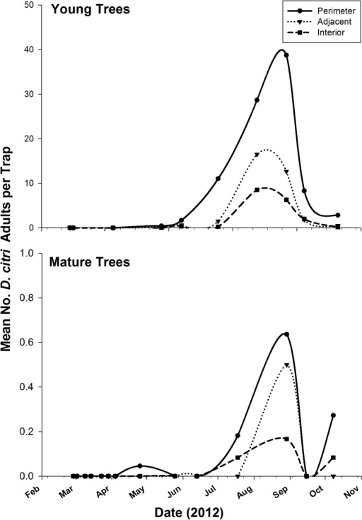 Mean number of D. citri adults caught on ACP-traps relative to tree position mature and young grapefruit groves in a field study (TAMUK-Citrus Center, 2012).