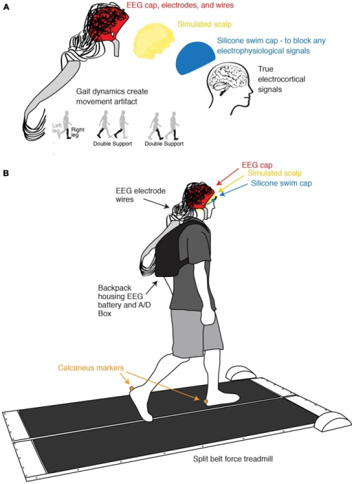 Experimental setup and channel location illustration. (A) Illustration of the process of isolating and measuring gait-induced movement artifact in EEG recordings. A simulated conductive scalp permits the electrodes to measure voltage differences resulting from gait dynamics while a silicone swim cap blocks true electrocortical signals. (B) Schematic of experimental setup and channel locations. Subjects walked on a custom split-belt force measuring treadmill at four speeds (0.4, 0.8, 1.2, and 1.6 m/s). Calcaneus marker positions were recorded using motion capture.