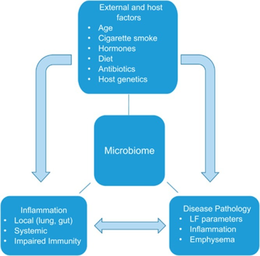 Interaction matrix: risk factors for chronic respiratory diseases and associated pathology with microbiome. Major risk factors could lead to immune dysregulation, characteristic pathology and 'dysbiosis'. Altered microbiome could then aggravate the host immunity and disease pathology. Notably, aberrant immune response could further skew the microbiome favoring specific pathogens typically reported in respiratory diseases, such as COPD and CF. LF, lung function.