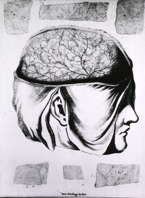 <p>Head in right profile with the brain exposed and depicting a network of veins; fragments of the skull cap frame the head.</p>