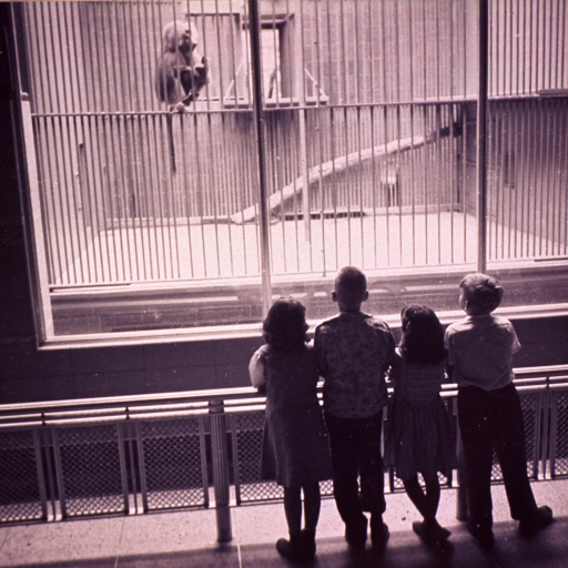 <p>Two girls and two boys  (full-length portrait standing, facing back) at the zoo (?) looking at a monkey in a cage.</p>