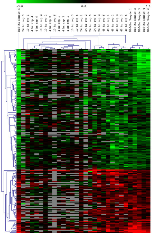 Hierarchical clustering of the 203 genes for which RA treatment of B16 cells reverts the expression towards that of melan-a cells. Average linkage was used with a Euclidean metric. The green-red color scale refers to log base two expression ratios with expression in untreated B16 cells as the denominator in all cases. Grey cells represent values which failed to pass the minimum expression level filter.