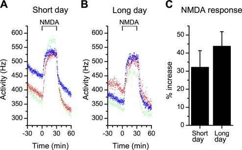 Acute responses in multiunit electrical activity to NMDA application at CT15.(A, B) NMDA application (10 µM) at CT 15 induced an increase in firing rate that was recorded by extracellular multiunit electrodes. The magnitude of the NMDA response is similar in slices from long and short day animals and in both photoperiods, a plateau was reached during the application. (C) The magnitude of the acute response to NMDA, measured as the relative increase in discharge rate, was not different between day lengths (p>0.3).
