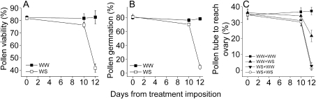 Percentage pollen viability (A), percentage pollen germination during 4 h culture in vitro (B), and percentage of germinated pollen tubes to reach the ovary after 24 h in hand-pollinated flowers in vivo (C) in Rupali chickpea in well-watered (WW) and water-stressed (WS) treatments. WW+WW, stigmas of WW plants pollinated with pollen from WW plants; WW+WS, stigmas of WW plants pollinated with pollen from WS plants, WS+WW, stigmas of WS plants pollinated with pollen from WW plants; WS+WS, stigmas of WS plants pollinated with pollen from WS plants. Days are from treatment imposition (Day 0=39 DAS) in Experiment 2. Values are means ±SE (n=10).