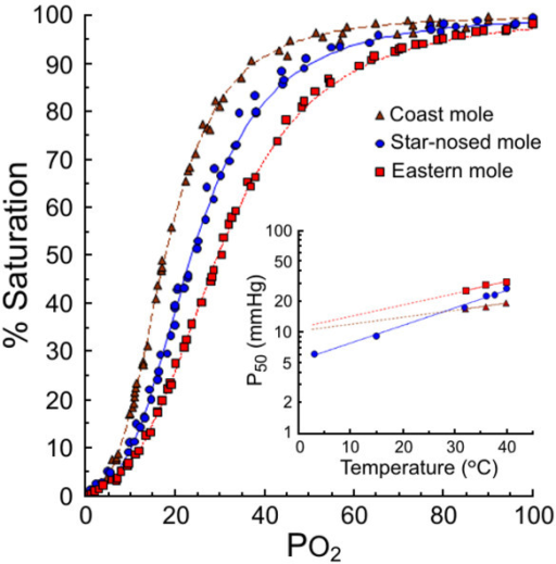 Oxygen equilibration curves of freshly drawn coast (■) eastern (▲) and star-nosed mole (●) blood at 36°C and a PCO2 of 38 mm Hg. Inset: The effect of temperature on the half-saturation pressure (P50) of whole blood of these three species.