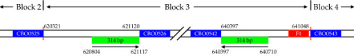 Schematic representation of sequence elements of strain ATCC3502 genome block 3 and its flanking regions. ATCC3502 genome block 3 spans the region between CBO0525 (the end of block 2) and CBO0543 (the start of block 4) and is 20728 bp in length. The vertical red lines indicate the block boundaries; the boxes in blue indicate annotated coding regions; the boxes in green indicate inverted repeat sequences; and the F1 fragment is indicated by a red box.