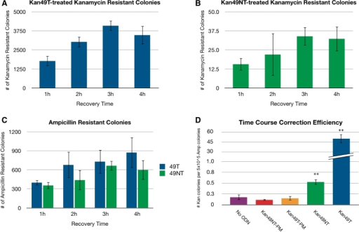 Average kanamycin-resistant colony counts for each recovery time point resulting from Kan49T-treated (A) and Kan49NT-treated (B) cells. (C) Average ampicillin-resistant colony counts of Kan49T- and Kan49NT-treated cells at a 5 × 10−4 dilution calculated from data from each recovery time point. (D) Average correction efficiencies calculated from data from all recovery time points for cells treated with no ODN, Kan49NT-PM, Kan49T-PM, Kan49NT and Kan49T. Correction efficiency is defined as the number of kanamycin-resistant colonies per 5 × 105 ampicillin-resistant colonies. ODN molarity was maintained at a 350:1 ODN to plasmid ratio for each experiment. For each reaction condition at least three independent experiments were conducted. **P < 0.001.