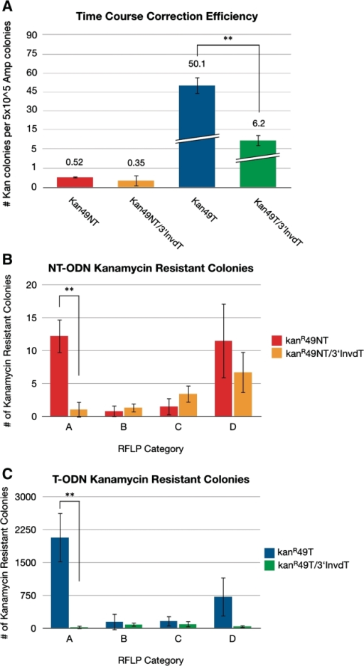(A) Average correction efficiencies for the entire time course of cells treated with Kan49NT, Kan49T, Kan49NT/3′InvdT and Kan49T/3′InvdT ODNs. Correction efficiency is defined as the number of kanamycin resistant colonies per 5 × 105 ampicillin-resistant colonies. ODN molarity was maintained at a 350:1 ODN to plasmid ratio for each experiment. For each reaction condition at least three independent experiments were conducted. (B and C) Average number of kanamycin-resistant colonies resulting from each of the four RFLP categories was calculated from the RFLP percentages and the total number of kanamycin-resistant colonies of the time course (1 h, 2 h, 3 h and 4 h) from kanR49NT, kanR49T, kanR49NT/3′InvdT and kanR49T/3′ODN-treated resistant colonies. Average RFLP percentages were calculated from 10–20 plasmid isolates resulting from each ODN-treated kanamycin-resistant colony populations. Three independent experiments were performed to determine average number of kanamycin-resistant colonies for each recovery time point. **P < 0.001.