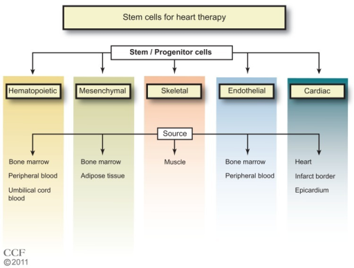 Types of stem cells in use for heart disease therapy.1–7Reprinted with permission, Cleveland Clinic Center for Medical Art & Photography © 2011–2012. All Rights Reserved.