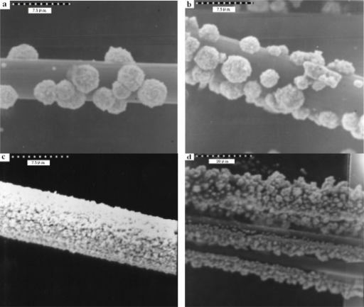 Scanning electron micrographs (at 4 kV) of a Au-coated carbon fiber composite surface. (a) Au (4 mM) deposits 240 s; (b) Au (4 mM) deposits 360 s; (c) Au (4 mM) deposits 480 s; (d) Au (4 mM) deposits 540 s in 0.1 M acetate buffer (pH 5.02).