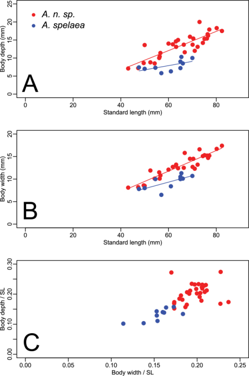 Plots illustrating the relationships between body depth, body width and standard length (SL). Circles in red represent specimens of Amblyopsis hoosieri, sp. n., from north of the Ohio River in Indiana; triangles in blue represent Amblyopsis spelaea from south of the Ohio River in Kentucky. (a) body depth versus standard length, (b) body width versus standard length, and (c) and body depth versus body width as proportions of standard length.