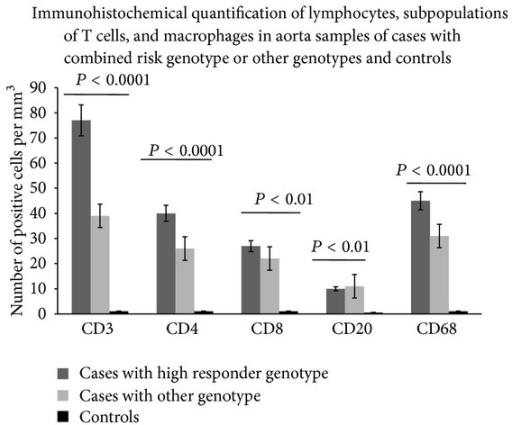 Morphometric quantification of lymphocytes, T cell subpopulations, and macrophages in aorta samples of cases with high responder genotype, other genotypes, and controls. CD3, CD4, CD8, CD20, and CD68 positive cells in media and adventitia and in 10 contiguous high-power fields (magnification 400x) were counted by two independent observers. Significant increased amounts of CD3+CD4+CD8+CD68+CD20+ cells were observed by comparing their values among the three groups (by ANOVA test). In particular, cases with high responder genotype had higher numbers of these cells than controls and cases with other genotypes.