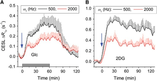 Rat-brain glucoCESL contrast at 9.4 T confirmed to be mainly from glucose chemical exchange (in vivo paradigm 3). Blood glucose concentrations were sustained at a steady state in (A) by injecting 0.3 g/kg D-glucose (Glc) over a 1-minute duration (blue arrow), followed by a constant infusion of Glc at 2 g/kg per hour for 1 hour (gray bar). For the 2-deoxy-D-glucose (2DG) studies of (B), a single injection of 1 g/kg was given at time=0. Arterial blood glucose levels at 60 minutes post injection increased to 160±25 mg/dL for Glc and 144±31 mg/dL for 2DG. Time courses of ΔR1ρ dependence on ω1 with intravenous injections of Glc (A, n=4, mean±s.e.m.) or 2DG (B, n=5, mean±s.e.m.) show values within midcortical regions, as typified in the inset image of Figure 5C. For clarity, ΔR1ρ data with ω1=1,000 Hz is not shown, since it falls between the data for ω1=500 and 2,000 Hz. The ΔR1ρ values are much smaller for ω1=2,000 versus 500 Hz, both for Glc and 2DG, which is expected for responses mainly due to CE effects. CESL, chemical exchange-sensitive spin lock.