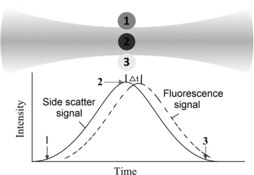 Illustration of a laser beam waist with a Gaussian intensity profile interacting with a cell (circular shape). As a cell enters the beam at 1, is fully illuminated at 2, and leaves the beam at 3, fluorescence emission (and corresponding light scatter) increases from 0 to its peak value and then decreases to 0 (bottom). The finite fluorescence lifetime causes a time delay Δτ of the fluorescence signal.