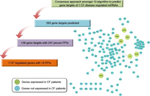 Protein-protein interaction networks of CF-related miRNA. A total of 7 CF regulated miRNAs were used to predict gene targets by employing a total of 10 different algorithms. This defined 263 putative targets which were mapped to the STRING database version 9.1 and revealed 247 PPI among 138 gene targets. Only PPI interaction for homo sapiens were considered and a confidence score >0.4 was requested. The predicted 138 gene targets were mapped to 1,042 DEGs identified among three independent CF patient-related whole genome gene expression data sets. This identified seven genes in common and a total of 19 PPI.