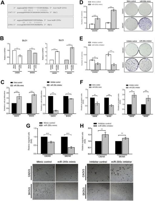 dlc cells