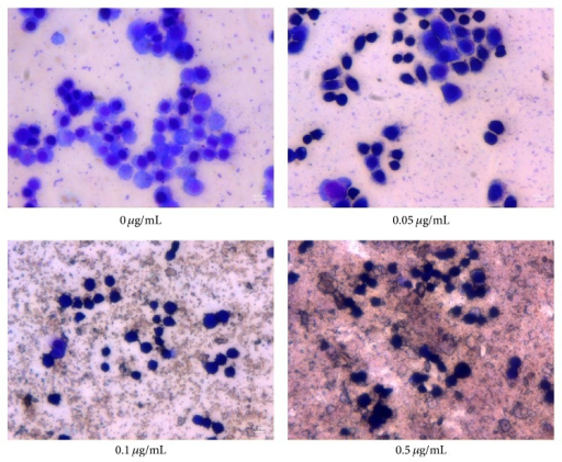 ZnO nanoparticles-induced morphological changes in LTEP-a-2 cells examined by Giemsa staining. Note significant changes in cells after 4 h of exposure to ZnO NPs (0 μg/mL, control).