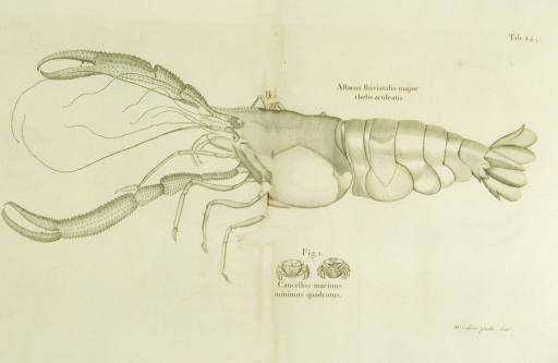 <p>Illustrations of a lobster and crab.</p>