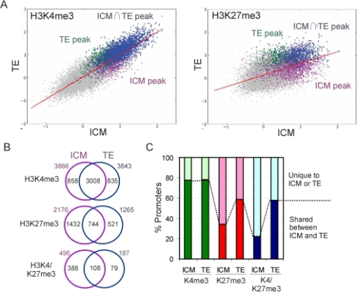 H3K27me3 is asymmetrically distributed in the ICM and TE.(A) 2-D scatter plots of averaged MaxTen values for H3K4me3 and H3K27me3 log2 signal intensities in ICM vs. TE. Data points were colored to indicate classification according to the peak calling algorithm to show H3K4me3- or H3K27me3-enriched promoters in all ChIP replicates in the TE (green), the ICM (purple) and common to both lineages (blue). (B) Venn diagram analysis of H3K4me3, H3K27me3 and H3K4/K27me3 promoters in ICM and TE. (C) Percentages of H3K4me3, H3K27me3 and H3K4/K27me3 promoters shared between ICM and TE, or unique to either lineage.