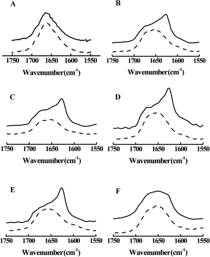Effect of lipid vesicles in the FTIR spectra of the amide I band of wtBO16 (solid lines) and W8A (dashed lines) at 25°C.Peptides in 100% (A) and 50% (B) DMSO or in the presence of LUVs of different compositions: PC (C), PC∶PE∶PI∶Cho (D), PC∶PE∶SPM∶Cho (E), or in the presence of lipid rafts from Vero cells (F). The peptide concentration was 19.5 mM, and the LUV concentration was 44 mM. The ordinate represents absorption (in arbitrary units).