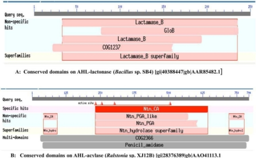 A. Conserved domains on AHL-lactonase (Bacillus sp. SB4) [gi/40388447/gb/AAR85482.1], B. Conserved domains on AHL-acylase (Ralstonia sp. XJ12B) [gi/28376389/gb/AAO41113.1].