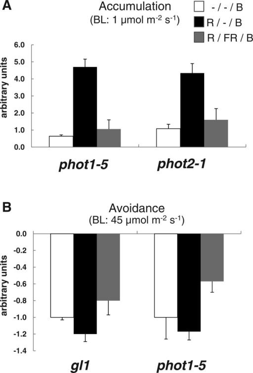 Red light enhances chloroplast movement and its effect is reversed by far-red light. Leaves were treated with the indicated fluence rate of blue light. Quantitative representation of the chloroplast movement. Light-grown Arabidopsis plants 3–4 weeks old were dark adapted for 1.5 h before red light treatment: either red light alone (R) (10 µmol m−2 for 10 s) or red light (10 µmol m−2 for 10 s) followed immediately by far-red (FR) (42 µmol m−2 for 30 s). A 2 h dark incubation period followed the red or red/far-red treatment prior to blue light (B) treatment (either 1 or 45 µmol m−2 s−1 for chloroplast accumulation or avoidance, respectively). (A) Chloroplast accumulation during 30 min low fluence rate blue light (1 µmol m−2 s−1). (B) Chloroplast avoidance during 30 min high fluence rate blue light (45 µmol m−2 s−1). Images of chloroplast movement were analyzed by Image J software as described for Fig. 1. Error bars are the SEM. n = 12 or more. The experiment was carried out three times with similar results.