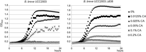Growth of B. breve UCC2003 and B. breve UCC2003::838800 in medium containing different sodium cholate (CA) concentrations, ranging from 0% to 0.1% (w/v), measured through OD at 600 nm. Data are mean of three independent experiments.