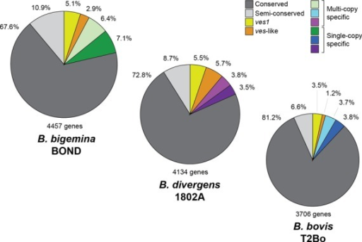 Pie charts showing the classification of predicted coding sequences in three Babesia genomes, based on three-way OrthoMCL analysis. Genes with a 1:1:1 distribution are termed 'conserved'. Genes present in all three species with variable copy number are called 'semi-conserved'. ves1 genes in Babesia bovis and full-length homologs in other species are represented in yellow. SmORF in B. bovis and ves-like short genes (ves2) in other species are represented in orange. The remaining species-specific genes (either single or multi-copy) are represented by green, blue and purple for Babesia bigemina, B. bovis and Babesia divergens respectively.