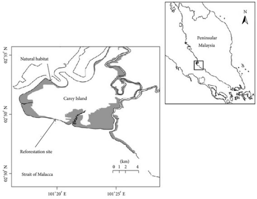 The geographical position of Carey Island. Gray-shaded hatch denotes the thin mangrove cover.