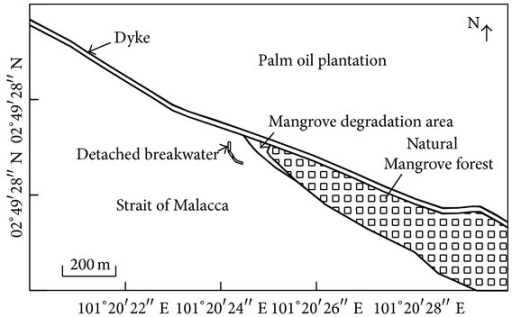 The schematic view of Carey Island after mangrove rehabilitation project in 2008.