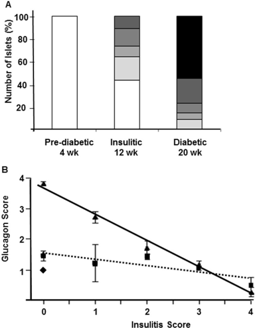 "Correlation of insulitis progression with alpha-cell remodeling in individual islets in diabetic NOD mice.Composition of the insulitic lesion in 4-wk old diabetes-prone (islets from 5 mice), 12-wk old insulitic (islets from 7 mice) and 18–24 wk old diabetic (islets from 7 mice) female NOD mice (A, Insulitis score: white = 0 (pre-inflammation), lightest grey = 1 (less than 1/3 of the islet infiltrated), light grey = 2 (between 1/3 and 2/3 of the islet infiltrated), grey = 3 (more than 2/3 of the islet infiltrated), dark grey = 4 (islets with full insulitis) and black = 0 (post-inflammation)). Correlation between the severity of insulitis and degree of glucagon-positive alpha-cells in 4 wk old (diamond), 12 wk old (square) and 20 wk old diabetic NOD mice (triangle; B). Linear regression analysis revealed a negative correlation between the glucagon and insulitis score in the 12 wk old (dotted line R2 = 0.79 and p<0.0005) and 20 wk old diabetic (solid line; R2 = 0.85 and p<0.0001) groups. Note: islets with an insulitis score of zero may be either pre- or post-inflammation. Islets that were termed ""post-inflammation"" were easily identifiable; that is, the insulitis had dissipated following destruction of the beta-cells and largely been replaced by alpha and delta-cells."