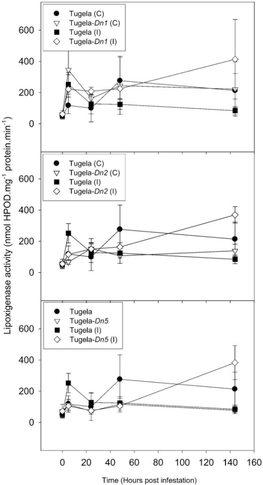Effect of D. noxia infestation on total lipoxygenase (LOX) activity of susceptible (Tugela) and resistant (Tugela-Dn1, Tugela-Dn2, Tugela-Dn5) near isogenic wheat lines.Values are means ± SD (n = 3).