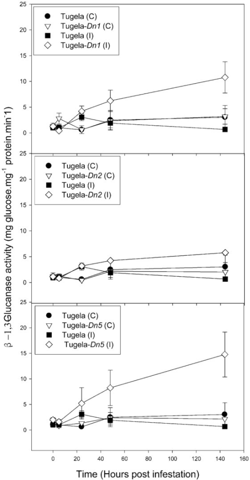 Effect of D. noxia infestation on the total β-1,3-glucanase activity of susceptible (Tugela) and resistant (Tugela-Dn1, Tugela-Dn2, Tugela-Dn5) near isogenic wheat lines.Values are means ± SD (n = 3).