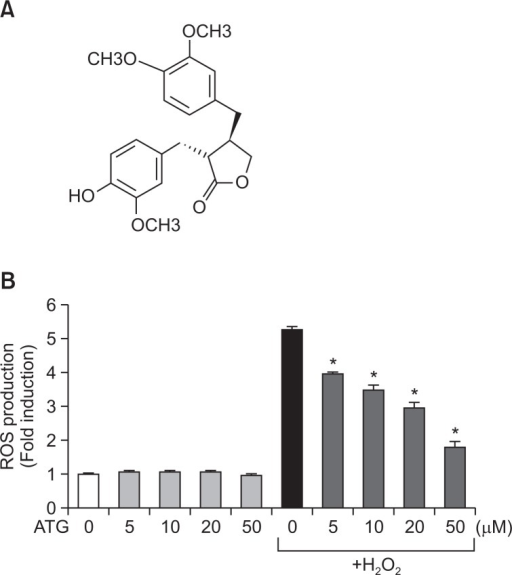 Antioxidant effects of arctigenin in rat primary astrocytes. (A) Chemical structure of arctigenin. (B) Rat primary astrocyte cells were treated with 5 to 50 μM arctigenin for 1 h, followed by treatment of H2O2 (500 μM) for 30 min. The intracellular ROS levels were then measured by the DCF-DA method as described in the Materials and Methods section. The data are expressed as the mean ± S.E.M. of three independent experiments. *p<0.05, significantly different from H2O2-treated samples. 'ATG' indicates arctigenin.