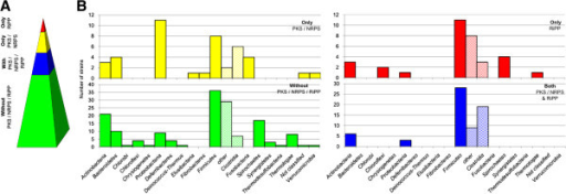 Potential of anaerobic bacteria for PKS/NRPS/RiPP production and distribution among different phyla. A Distribution of genes for secondary metabolite production; percentage of strains containing: no PKS/NRPS/RiPP genes (green); both PKS/NRPS and RiPP (blue); only PKS/NRPS (yellow); only RiPP (red) B Distribution of secondary metabolite containing strains according to phyla and ability for secondary metabolite production (no PKS/NRPS/RiPP genes (green); both PKS/NRPS and RiPP genes (blue); only PKS/NRPS genes (yellow); only RiPP genes (red)). Firmicutes are additionally divided into Clostridia and others.