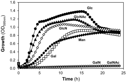 Growth of S. pneumoniae D39 in glycan-derived sugars.Growth profiles of D39 grown in CDM supplemented with 30 mM of galactose (Gal), mannose (Man), N-acetylglucosamine (GlcNAc), glucosamine (GlcN), N-acetylgalactosamine (GalNAc), galactosamine (GalN) and glucose (Glc). Growth experiments were performed at 37ºC and at an initial of pH 6.5, using a 96-well microtiter plate reader. Symbols: (closed circle) Glc; (closed triangle) GlcNAc; (open diamond) GlcN; (open square) Gal; (closed diamond) Man, (dash) GalNAc and (open circle) GalN. Growth curves are plotted in decimal scale to assess for significant differences in the growth profiles.