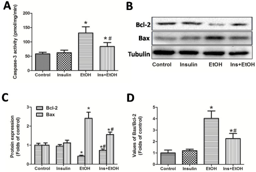Insulin pre-administration ameliorated acute ethanol exposure-induced apoptosis in liver of mice. (A) Hepatic Caspase-3 activity; (B) Bcl-2, Bax protein expressions in liver determinate by Western blotting; (C) Values of the Bcl-2, Bax protein expressions expressed as the folds of control; (D) Values of Bax/Bcl-2 expressed as the folds of control. Normalizations of Western blots were ensured by Tubulin. Data of A were expressed as mean ± SD of eight mice per group (n = 8). Data of C and D were expressed as the mean ± SD of three independent experiments (n = 3). *P< 0.05, compared to control group; #P < 0.05, compared to EtOH group.