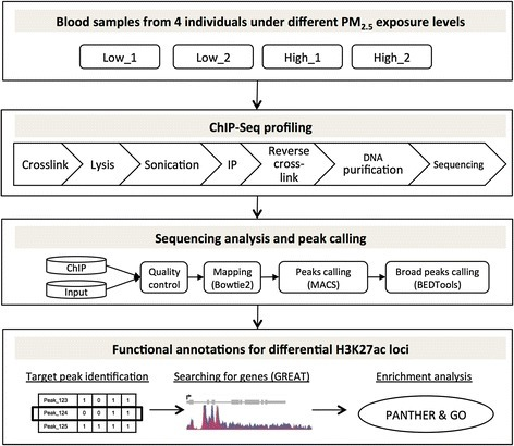Overview of the study design and analysis workflow. Nuclei were extracted from blood samples of four individuals under low or high exposure of outdoor PM2.5. Standard protocol was used for ChIP-Seq experiments. Bioinformatics software (in brackets) and in-house scripts were used to analyze the sequencing data. The functions of differential H3K27ac loci were evaluated using public databases. ChIP: chromatin immunoprecipitation; IP: immunoprecipitation; GO: gene ontology