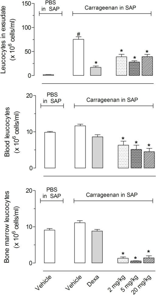 Effects of pure citral on total leukocyte counts in blood and bone marrow.Animals were pretreated with citral (2, 5 or 20 mg/kg) or vehicle 1 h prior to carrageenan (1%) injection into the SAP. The results are presented as the mean ± S.D. (n = 10 per group) of leukocytes (x 106/mL) in ex udate, blood or bone marrow. Statistical significance was calculated by ANOVA followed by Bonferroni's test. *P < 0.05 when comparing citral-treated animals with carrageenan injected in the SAP with the group that received carrageenan in the SAP.