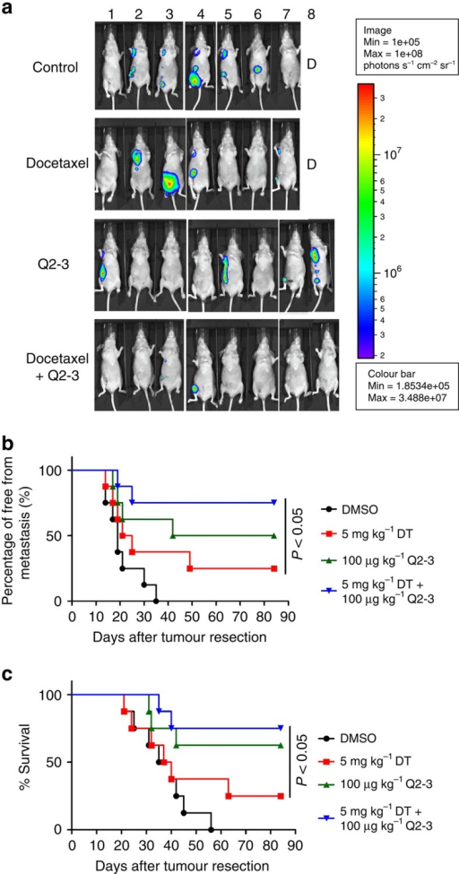 Q2-3 administration can confer a complementary anti-metastatic effect on human cancer cells (MDA-MB-231), when used in combination with docetaxel.(a) Representative bioluminescent images of MDA-MB-231 tumour-bearing nude mice (n=8 per group) after in vivo treatment with PBS (0.1% DMSO in saline), Q2-3 (100 μg kg−1), docetaxel (5 mg kg−1) or co-treatment with docetaxel and Q2-3 for 3 weeks, after resection of the orthotopic primary tumours. In PBS-treated (control) and docetaxel-treated groups, one mice was died before 3 weeks post tumour resection. (b) Quantification of tumour metastasis by measuring luciferase activity in photons s−1 cm−2 sr−1 in mice revealed along the indicated time course. (c) Survival of test mice after different treatments. P<0.05, were obtained between the docetaxel- and co-treated mice (Kaplan–Meier results were analysed by log-rank test). Similar results were obtained from two or three independent experiments.