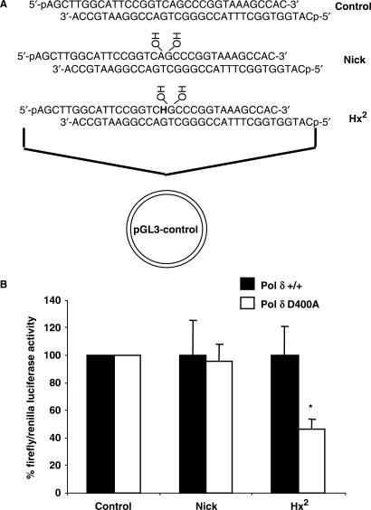 Repair ability of mouse embryonic fibroblasts deficient in Pol δ exonuclease against Hx located as a second nucleotide 5′- to a DNA single strand break. Plasmid constructs used in the experiments were prepared by ligation of the shown oligonucleotide duplexes into a luciferase reporter vector (A). Plasmids were transfected into either wild-type (Pol δ +/+) or mutant (Pol δ D400A) cells and after 8 h cell extracts were prepared and luciferase activity was measured. The average and standard error are shown graphically (B). Asterix (*) represents a statistical difference P < 0.02 compared to the wild-type cell line using t test.