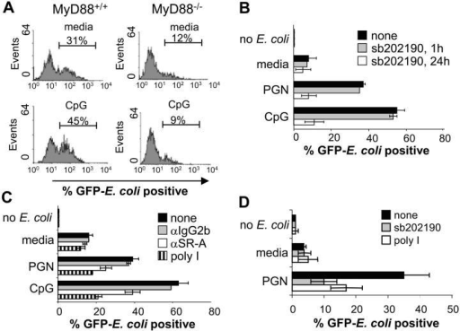 TLR-induced phagocytosis of bacteria is MyD88, p38, and SR dependent. (A) BMMs derived from either wild-type or MyD88-deficient mice were stimulated with media or 100 nM CpG for 24 h followed by infection with GFP-expressing E. coli at an MOI of 10 for 45 min. Cells were washed twice with cold PBS and subjected to FACS® analysis. (B) RAW 264.7 macrophage cells were stimulated with media, CpG (100 nM), or PGN (20 μg/ml) for 24 h. Cells were cotreated with 10 μM sb202190 for the entire duration of the media, CpG or PGN pretreatment, or just for the final 1 h. Cells were then challenged with GFP–E. coli for 45 min at an MOI of 25, washed, and subjected to FACS® analysis. (C) RAW 264.7 cells were pretreated with either media, CpG (100 nM), or PGN (20 μg/ml) for 24 h. For the final 1 h, the cells were treated with poly I (100 μg/ml), anti–SR-A (3 μg/ml), or IgG2b isotype control (3 μg/ml) and phagocytosis assays were performed. (D) THP-1 monocytes were treated with media or PGN (20 μg/ml) for 36 h. The same conditions were also used along with sb202190 (10 μM) for 36 h or poly I (100 μg/ml) for the final 1 h of TLR ligand pretreatment. Cells were then challenged with GFP–E. coli at an MOI of 5, washed, and subjected to FACS® analysis. Data represent at least two independent experiments.