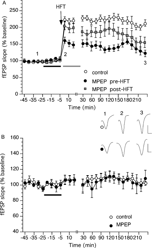 Application of an mGluR5 antagonist either prior to or after HFT prevented LTP in the CA1 region. (A) HFT (100 Hz) induced persistent LTP (which lasted for at least 4 h) in the CA1 region in vitro. Application of the mGluR5 antagonist MPEP (40 µm), for 20 min prior to HFT, significantly prevented both the induction and the expression of LTP. Application of MPEP (40 µm) for 20 min after HFT significantly prevented the expression of LTP beyond 2 h post-HFT. Bar indicates drug application before (black) or after (grey) HFT. (B) Application of MPEP (40 µm) did not affect basal synaptic transmission compared to controls. Bar indicates drug application. Insets: evoked potentials obtained in the presence of vehicle or MPEP (applied pre-HFT) at the timepoints noted: vertical bars, 2 mV; horizontal bars, 2 ms.