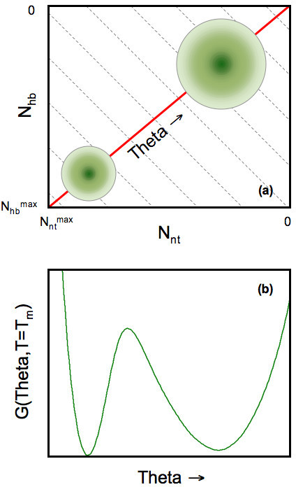 (a) Cartoon of the free energy landscape in two-dimensional constraint space. Each point on the two-dimensional grid defines a macrostate, (Nnt, Nhb), where the free energy, G(Nnt, Nhb), is calculated. The green shading is meant to describe the native (lower-right) and unfolded (upper-left) basins within the free energy landscape. (Notice that the axes are decreasing from bottom to top and left to right.) At times it is convenient to express the free energy as a function of a one-dimensional flexibility order parameter, θ(Nnt, Nhb). Grey dashed lines represent (approximate) fronts of constant global flexibility due to tradeoff between two constraints types. The red line denotes the shortest path crossing a single saddle from the unfolded to folded basins. (b) An example one-dimensional free energy landscape highlights the straddling barrier that must be crossed as the protein transitions between folded and unfolded.