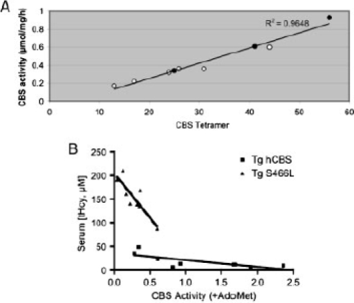 Correlation between CBS activity, tetramer formation, and serum tHcy. A: Correlation between CBS tetramer density and CBS activity (in presence of AdoMet) in the livers of mice of respective genotype. Black dots represent Tg-hCBS mice and white dots represent Tg-S466L mice. B: Correlation between liver CBS activity (in presence of AdoMet) and serum tHcy in Tg-hCBS (n = 8) and Tg-S466L (n = 9) mice. CBS activity has been measured in the terms of micromoles (µmol) of cystathionine formed per milligram of protein per hr.
