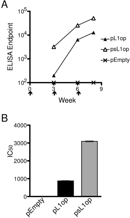 L1 binding and neutralizing antibodies in sera of mice immunized with pL1op and psL1op. (A) Mice (n = 5) received empty vector, pL1op or psL1op by gene gun on day 0 and after 3 and 6 weeks. Mice were bled at 3, 6 and 8 weeks after the first immunization. Antibody binding to L1 was determined by ELISA. Arrows point to days of immunization. (B) Neutralizing antibodies (IC50) were measured at 8 weeks using a flow cytometry assay.