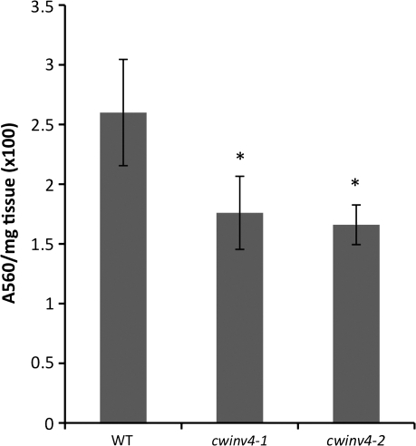 cwinv4 flowers accumulate decreased total soluble sugar. Whole flowers (Stage 14–15) from both cwinv4-1 and cwinv4-2 displayed significantly lower levels of total soluble sugar (sucrose and glucose) than wild-type plants (n=3, *P=0.027 and 0.013, respectively). Results are displayed as total absorbance per mg of floral tissue ×100. The relative proportion of sucrose-to-glucose was similar between cwinv4 and wild-type flowers (data not shown).